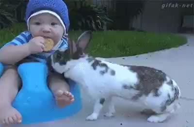 Funny | animals | kids babies baby | Tamil Whatsapp Status Videos | KunduBulb
