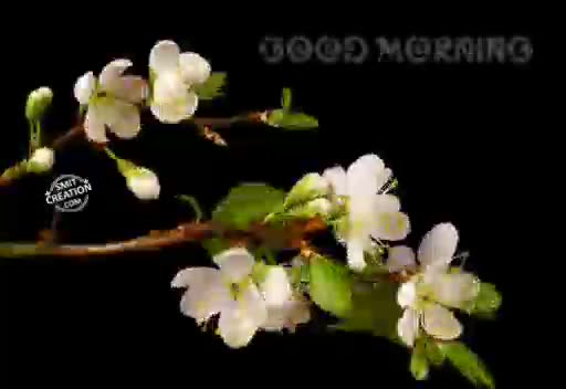 Misc | greetings | good morning | Tamil Whatsapp Status Videos | KunduBulb