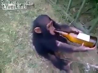 Funny | animals | drink drunk | Tamil Whatsapp Status Videos | KunduBulb