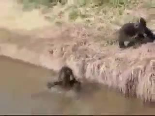 Funny | animals | Tamil Whatsapp Status Videos | KunduBulb