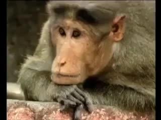 Funny | animals | inspiration | Tamil Whatsapp Status Videos | KunduBulb